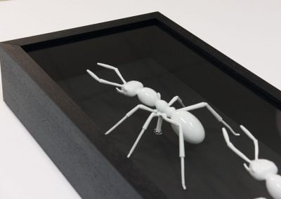 Memorabilia-Ants